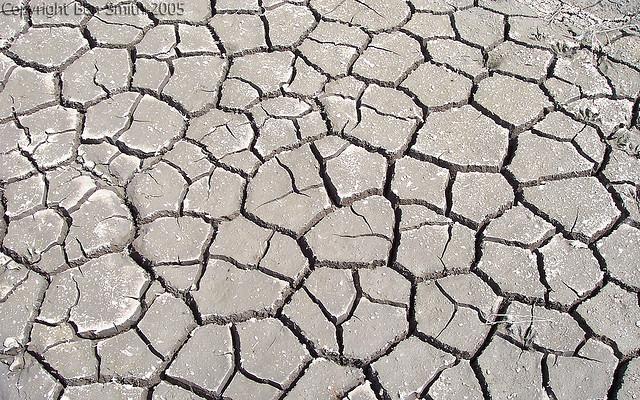 Fraktaler o torkad lera. Foto 8.