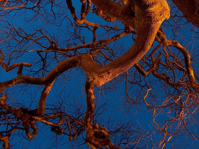 Fraktaler i trädgrenar